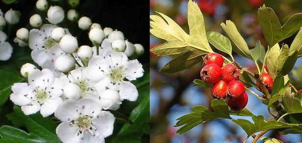 Pin on Sanatatea ta Plante si fructe medicinale