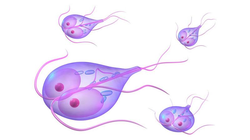 Pierdere în greutate giardiasis. Giardiază - Wikipedia