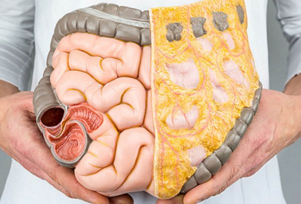 cum să pierzi grăsimea organelor interne