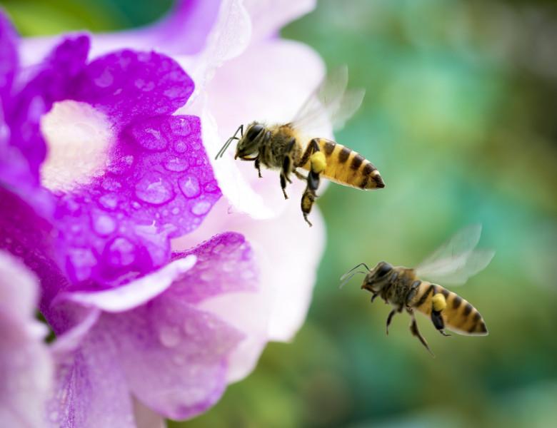 albine polen pentru pierderea în greutate)