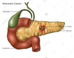 De ce trebuie să avem grijă de pancreasul nostru - Farmacia DONA