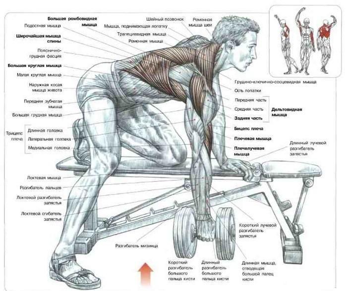 pierdeți în greutate în partea superioară a spatelui slăbește sănătatea bărbaților