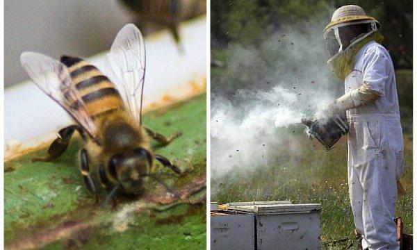Albine polen pentru pierderea în greutate
