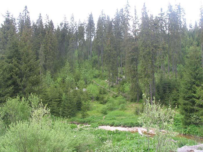 wake studiu de pierdere în greutate din pădure