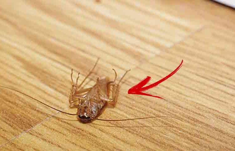 Boli transmise de insecte – vectori, mecanisme, exemple, precauții