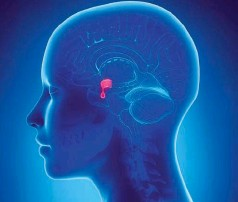 Tipuri și simptome de adenom hipofizar al creierului