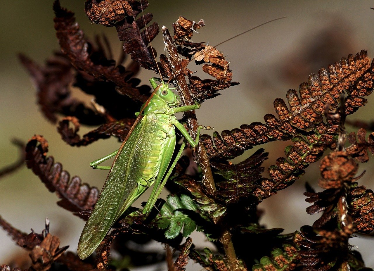 Șopârle: toate numele speciilor și descrierea lor. Șopârle domestice: ce sunt? Ce sunt șopârlele