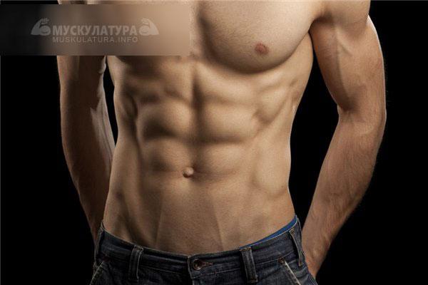 sunt bare de proteine sănătoase | terraagroinvest.ro