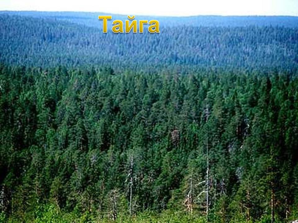 pădure de molizi de slăbit