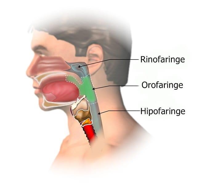simptome de pierdere în greutate în gât